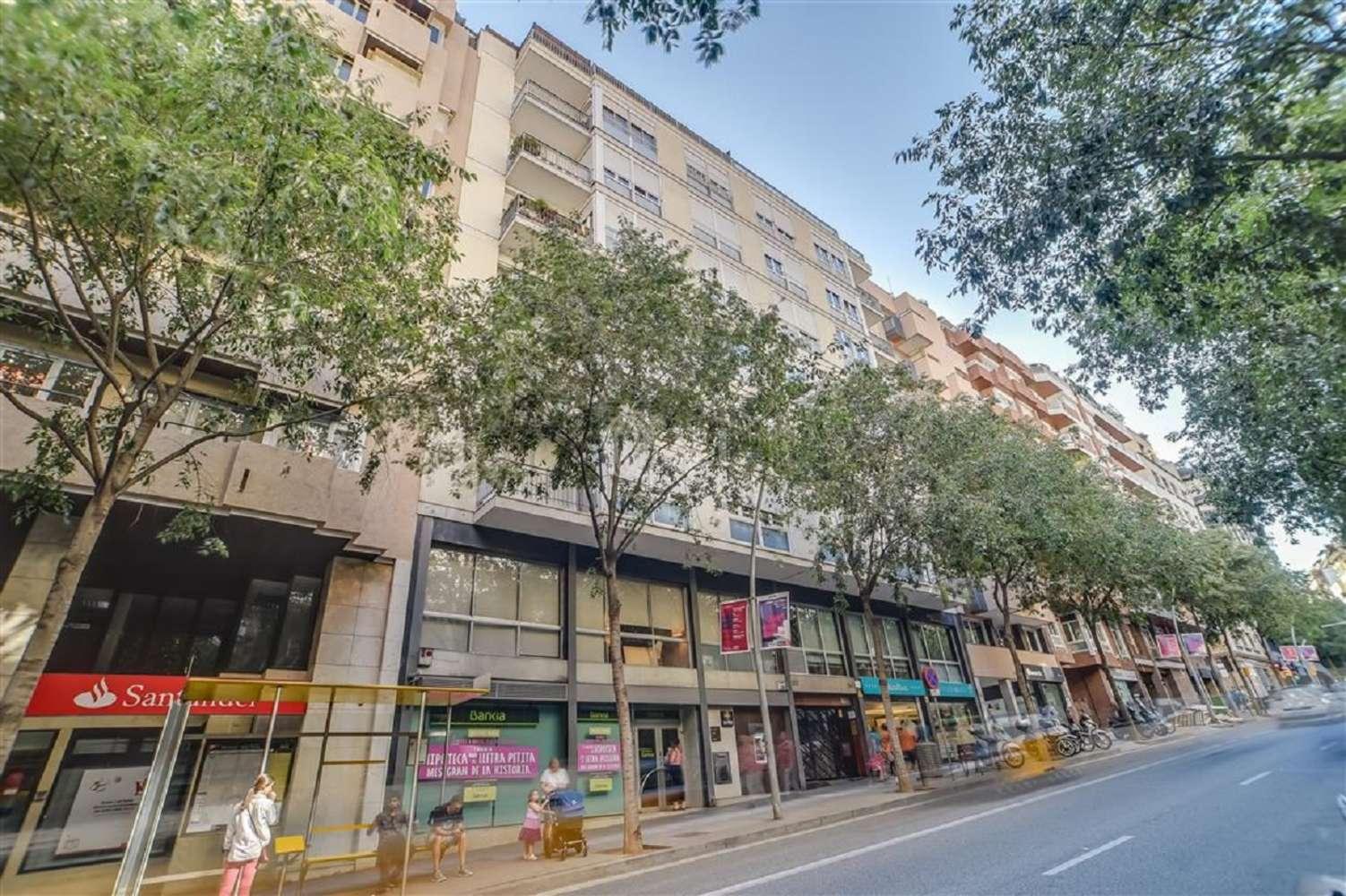 Oficina Barcelona, 08022 - MUNTANER 537 - 18884